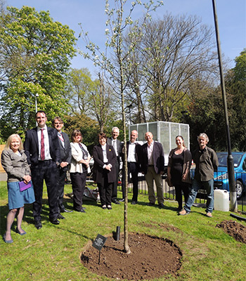 Tree planted in memory of Cynthia Jones