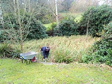 The pond was covered in plant life before the Kingston University clean-up operation.