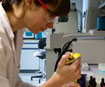 University researcher Tamsyn Thring at work in the Kingston University laboratories.